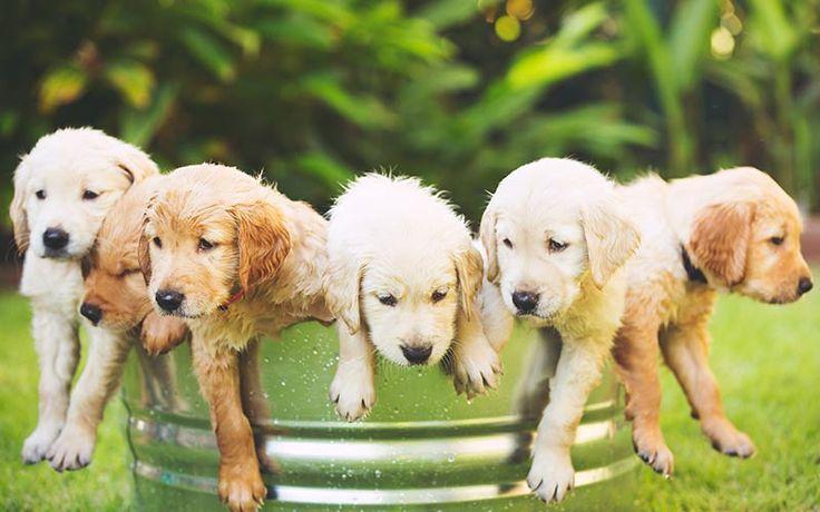 Homeward Bound Dog Names