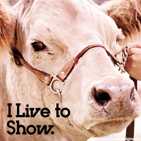 133 best show cattle images on pinterest showing for Show stopper equipment