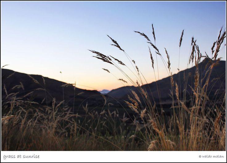 Grass At Sunrise