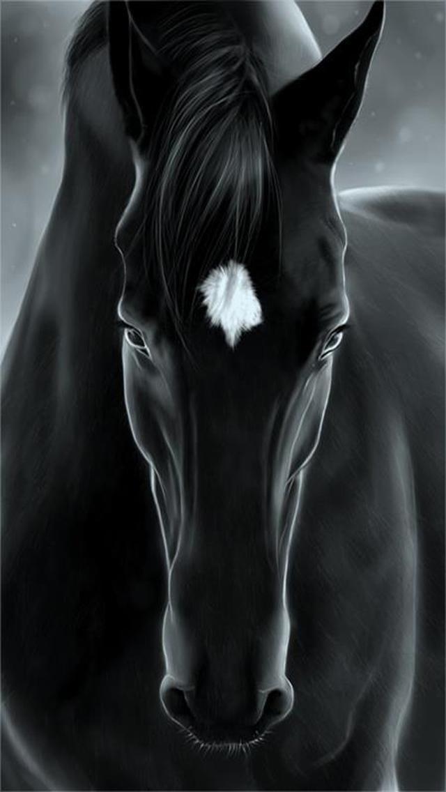 Horse حصان