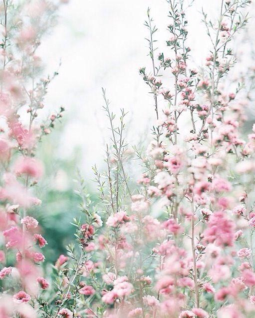 pretty delicate flowers
