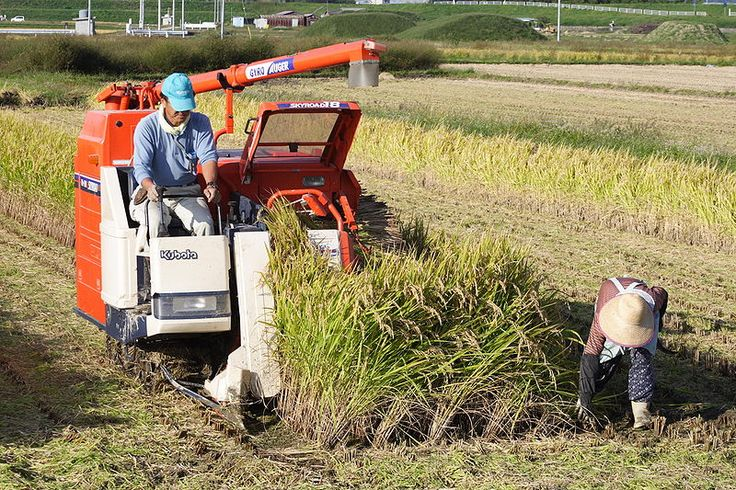 A Kubota combine harvester harvesting rice in Japan