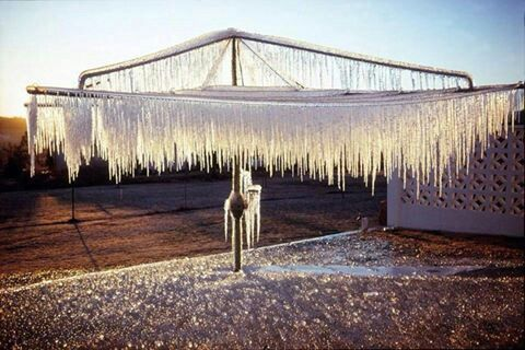 taken in Stanthorpe in Qld which is in the Granite Belt north of Tenterfield in NSW - probably colder than Lonnie in TAS