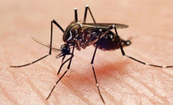 ¿Quieres ahuyentar a los mosqitos de manera natural? Nosotros te decimos como…