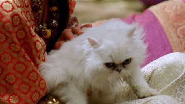 Purr Blur!  A Persian cat makes the briefest of appearances in the Oliver Stone epic film Alexander (2004).