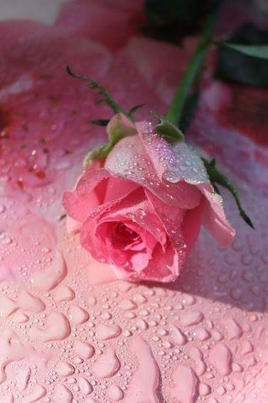 pink ✿⊱╮
