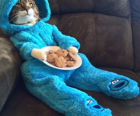 Cookie Monster? Wow Youre Good.