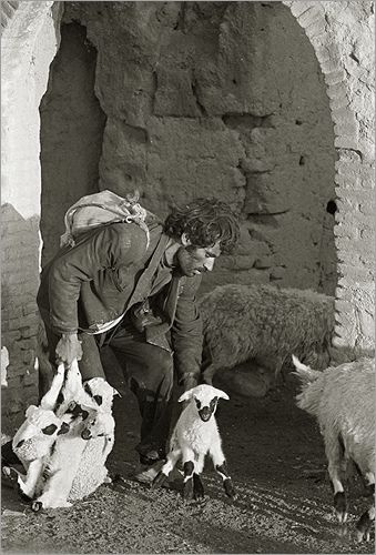 Afghan Shepherd: 124 Best Images About Sheep, Shepherds, And Sheep Dogs On
