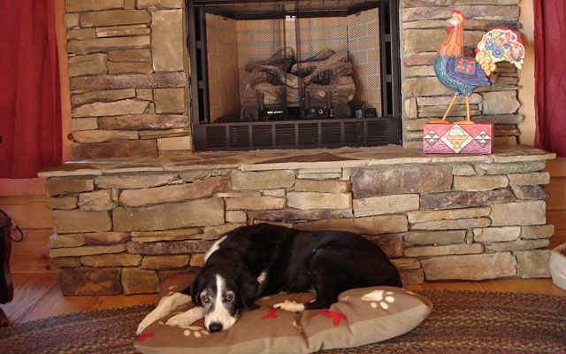 16 best images about vacation for your dogs on pinterest for Asheville cabin rentals pet friendly