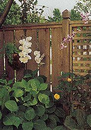 Best 25 Lattice Fence Panels Ideas On Pinterest Trellis