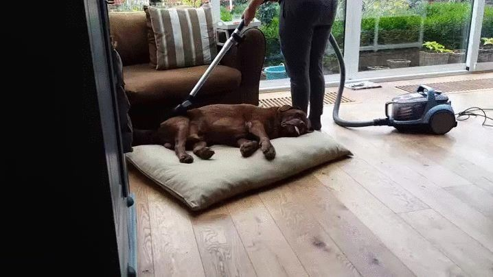 Las mejores aspiradoras le gustan hasta los perros, consulta nuestra seleccion: http://www.lasaspiradoras.com/tabla-caracteristicas-aspiradoras-trineo/