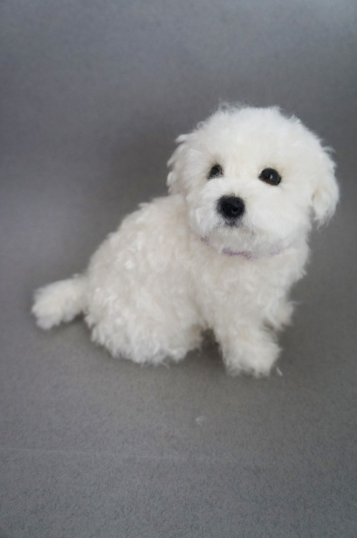 Life Size Needle Felted Puppy Maltese Dog, Wool Maltipoo Shorkie, Felt Animal, Custom Pet Dog Portrait Figurine, Miniature, Pet Memorial by #JanetsNeedleFelting on Etsy #puppy