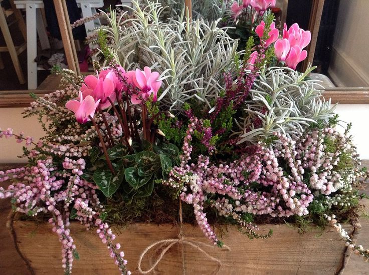 Winter Cheese Box planters - just add Cyclamen, mixed herbs and gorgeous Heather