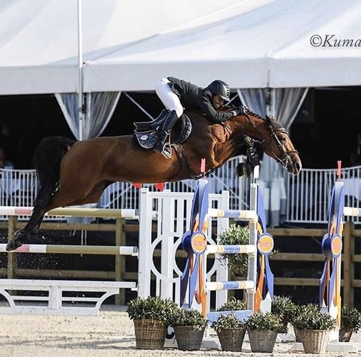 Pin By Best In Blue Equestrian On Jumping Show Horses