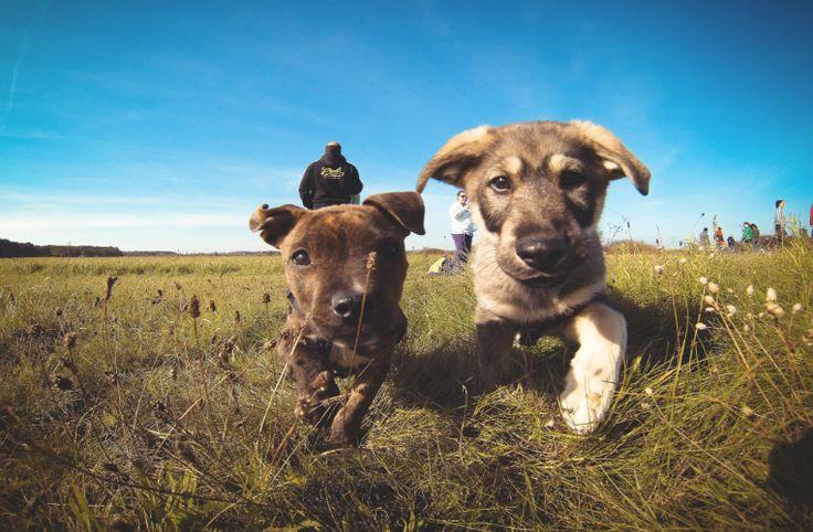 cuccioli di cane amici del cuore <3
