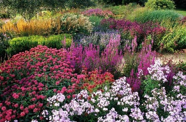 """1000+ images about """"Perennials"""" ... Plants that come back ..."""