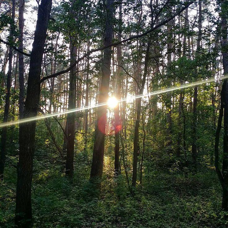 To jest Twój promień szczęścia. Musisz iść po niego do lasu. Na blogu przygotowałam trasę specjalnie dla Ciebie. #neirawypełzaznory  #las #słońce #promienie #natura #krajobraz #szczęście #bezfiltra #wycieczka #pieszo #trasa  #forest #sun #sunbeam #nature #landscape #happiness #nofilter #trip #walking #route  #blog #wpis #bloger #nowywpis #post #notka