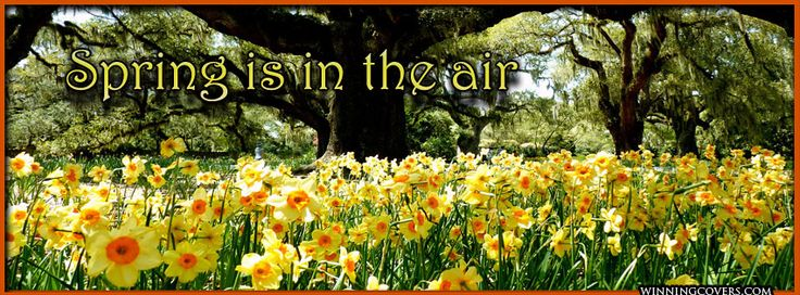 Spring Accommodation Facebook Covers: 30 Best Facebook Covers Images On Pinterest