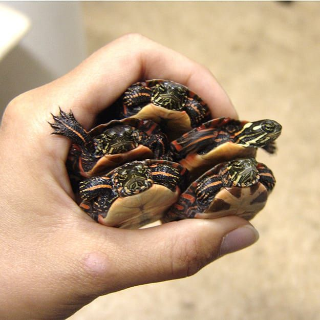 20 Life Lessons We Can Learn From Turtles And Tortoises ...