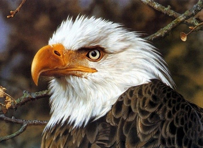 #Орел - #властелин #воздуха. Парящий в синеве неба над #бескрайними #просторами орел стал #символом #Великой степи, простирающейся от #Черного #моря до предгорий #Большого #Хингана в #Монголии.