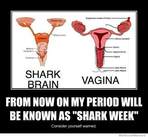"I had heard of the term ""shark week"" before this, however, this gives a more humorous connection than I had previously gleaned/guessed at, as the source. Shark-Week it is?"