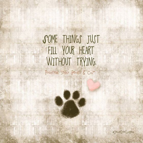 Love your dog:
