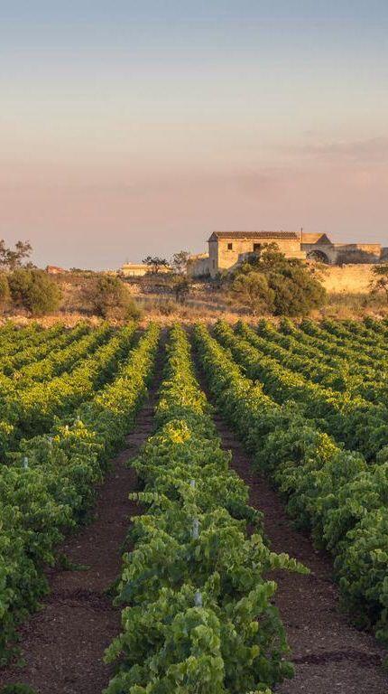 #Sicily #vinejards enjoy the heritage of #wine with #Nero d' #Avola #Insolia #Grillo #Cataratto #Malvasia #Passito www.bebtrapanigranveliero.it