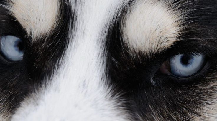 Bearhill's Call of the Wild Tour - Husky Safari -Rovaniemi, Lapland, Finland