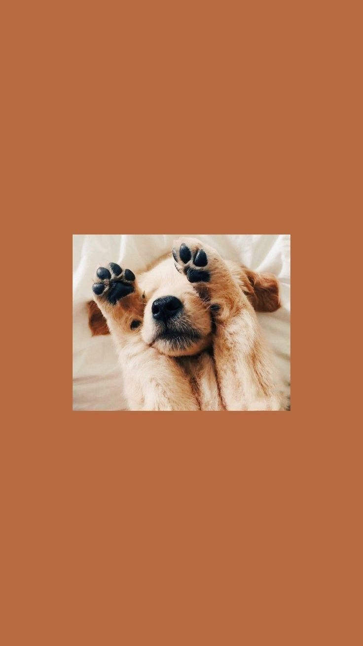 Wallpaper Goals In 2020 Cute Dog Wallpaper Puppy Wallpaper Puppy Wallpaper Iphone
