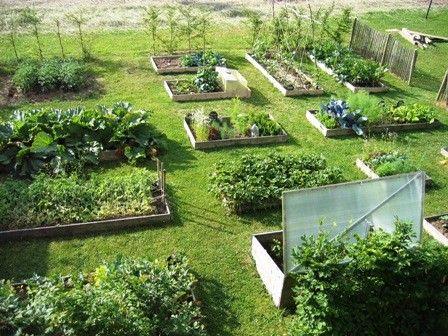 POTAGER EN CARRÉS - La présentation d'une technique de jardinage en vogue et basée sur le principe de rotation et de complémentarité des cultures : le potager en carrés.