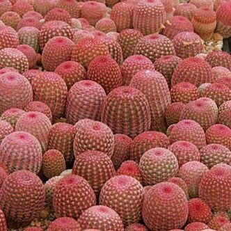 Desert bloom in California. Xk