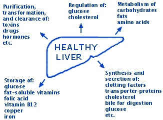 Liver function with diagram diy wiring diagrams 256 best gi system images on pinterest nursing schools medicine rh pinterest co uk liver function with diagram liver function test diagram ccuart Image collections