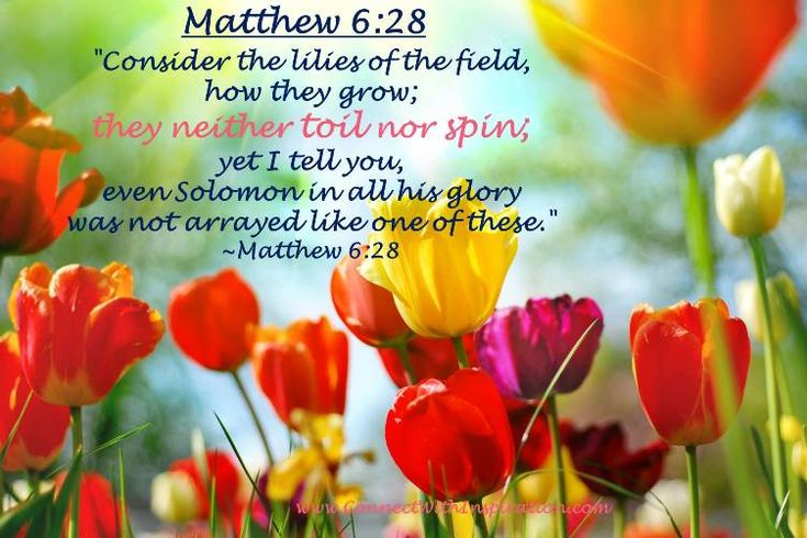 """""""Consider the lilies of the field, how they grow; they neither toil nor spin; yet I tell you, even Solomon in all his glory was not arrayed like one of these.""""   ~Matthew 6:28"""
