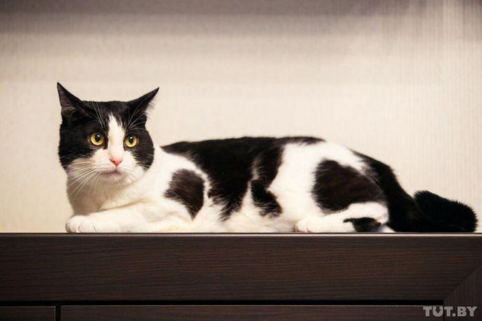 Самый популярный белорусский кот: как Пусик стал звездой YouTube » Женский Мир