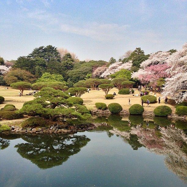新宿御苑 (Shinjuku Gyoen) in 東京, 東京都 - Shinjuku Garden - Late March/early April (Cherry Blossoms) or during autumn for maple trees from mid November/mid December  http://www.japan-guide.com/e/e3034_001.html