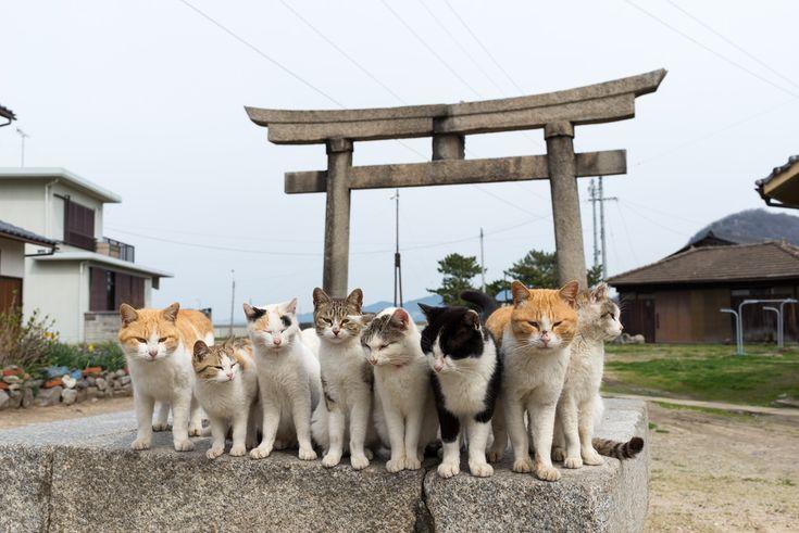 A group of cats on Sanagishima[2048x1367]