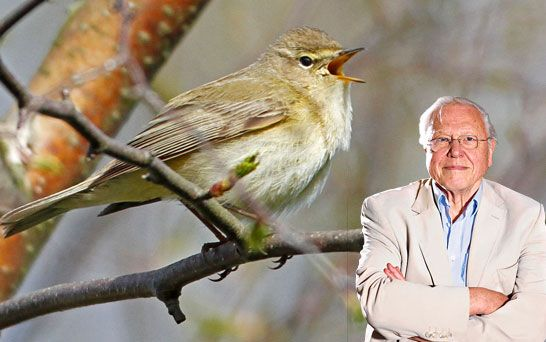 Tweet of the day. Discover birds through their songs and calls. Each Tweet of the Day begins with a call or song, followed by a story of fascinating ornithology inspired by the sound. Broadcast on BBC Radio 4 on weekdays at 05.58am from Monday to Friday https://itunes.apple.com/gb/podcast/tweet-of-the-day/id641124153?mt=2