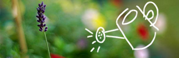 5 soluciones caseras para fertilizar las plantas. Más inform. en http://www.infojardin.com/foro/showthread.php?t=270866