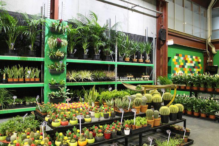 Santospirito Flower Wholesalers Melbourne Footscray