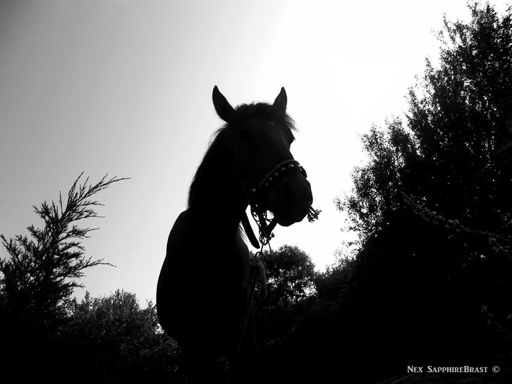 In the Shadow of a Horse. Nex SapphireBrast | Photography ©