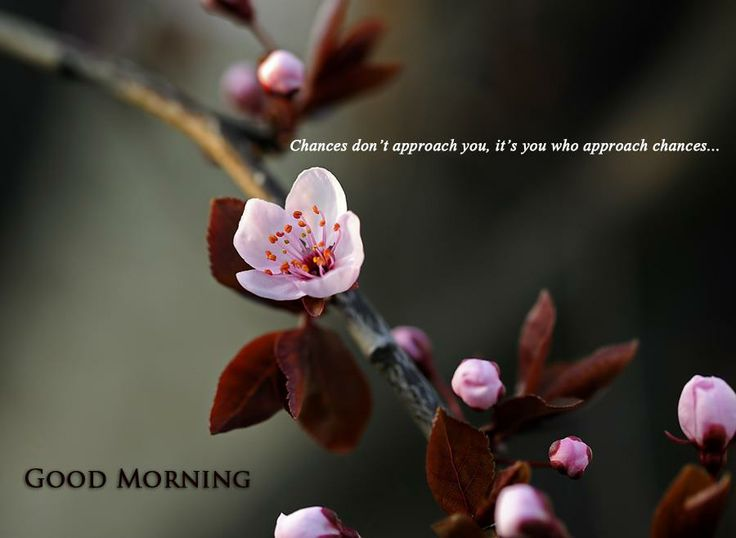 chances don't approach you it's you who approach chances  Good morning