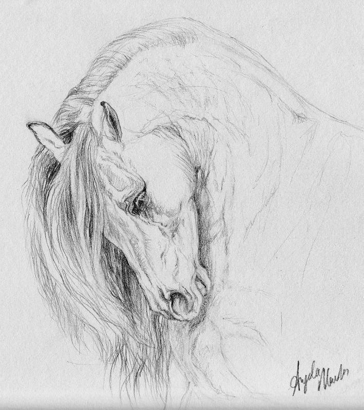 Pencil+Drawings+of+Horses | WIP Horse drawing... - WetCanvas