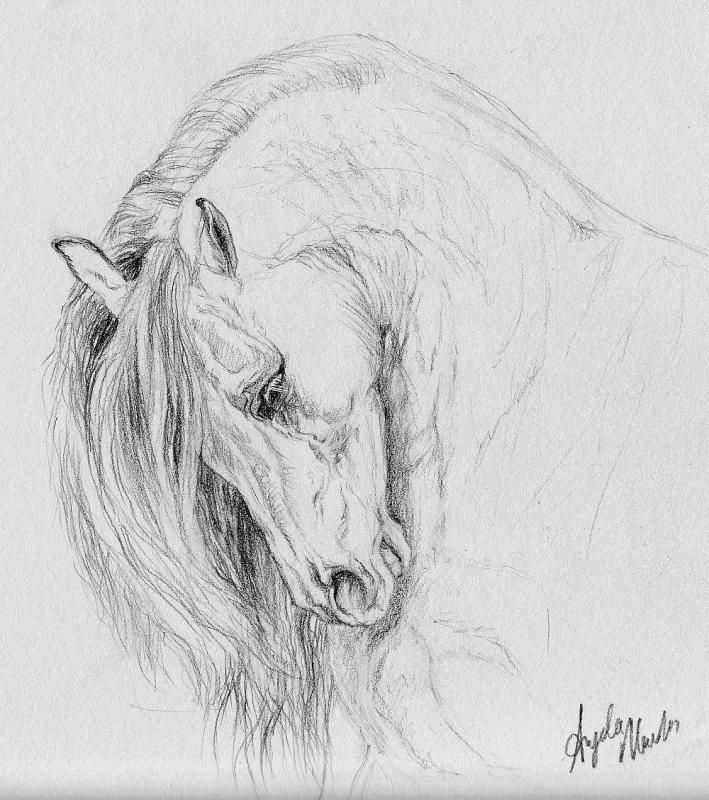 17 Best ideas about Horse Drawings on Pinterest | Horse drawing ...