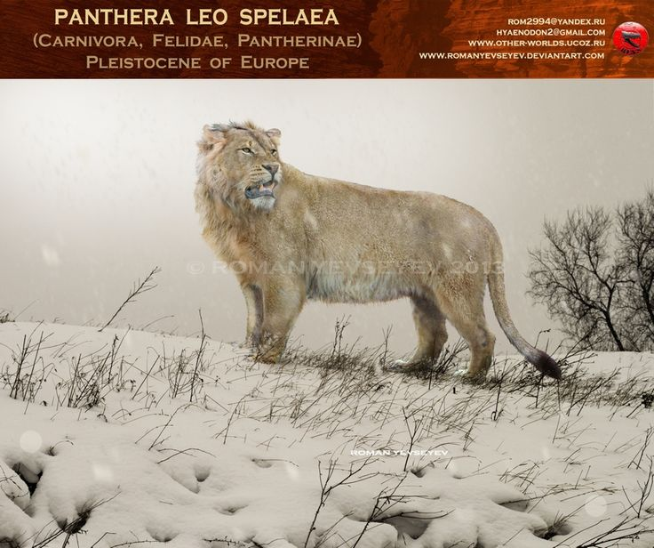 Panthera leo spelaea by RomanYevseyev on DeviantArt