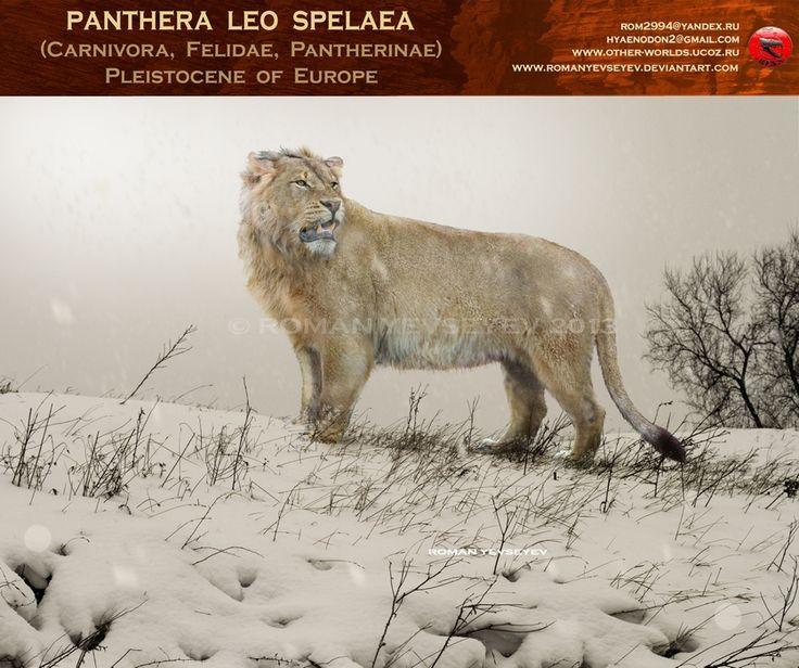 Panthera leo spelaea by RomanYevseyev on DeviantArt