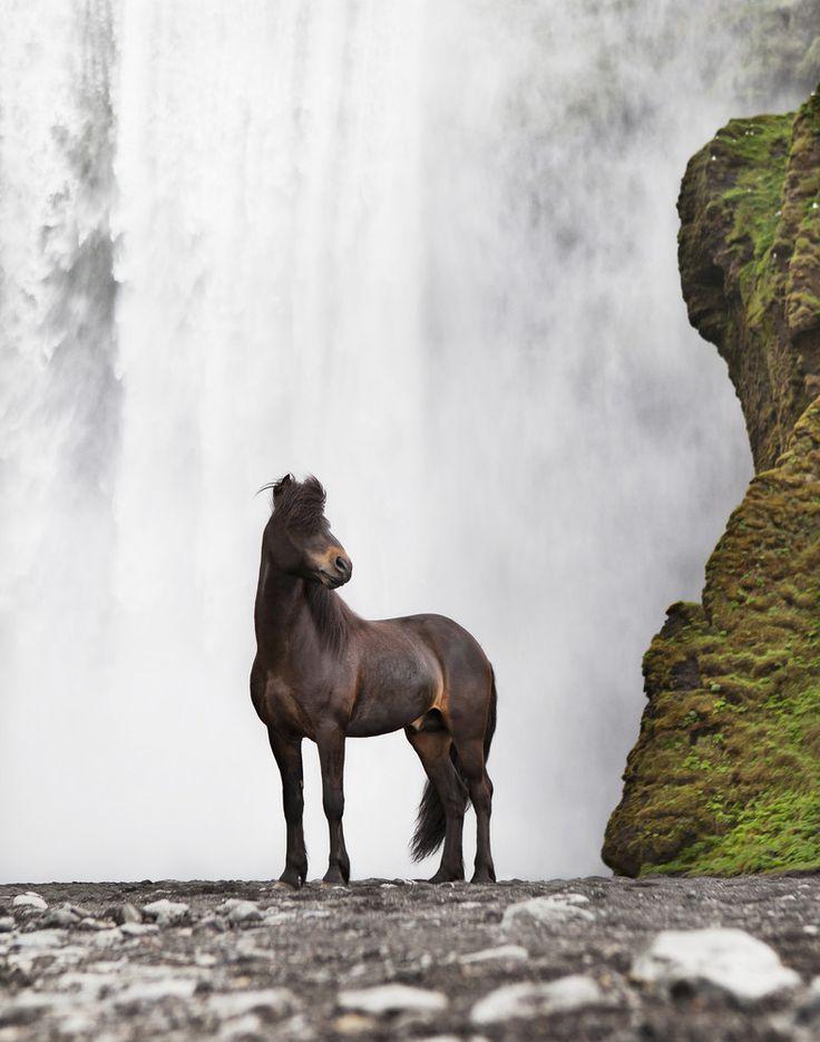 Icelandic Horse by Gigja Einarsdottir - http://www.flickr.com/photos/gigjae/