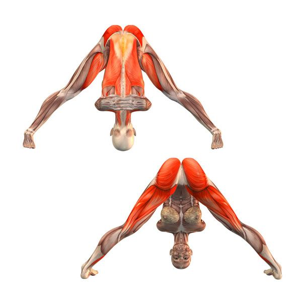 Wide-legged forward bend with hands lock - Prasarita Paddotanasana with hands lock - Yoga Poses   YOGA.com