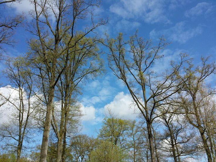 9 april 2014. Juist nu het zo hectisch is met alles rondom de verhuizing, probeer ik heel bewust tijd vrij te maken om te gaan hardlopen. En vandaag was het vanwege het weer extra lekker. En toen zag ik tussen de bomen door ook nog een omgekeerd hart in de lucht.