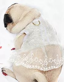 Bespoke Dog Harnesses by The Very Distingished Pug Company  | Our Products
