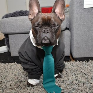 Man måste klä upp sig ibland! #Hund